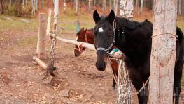 """База """"Дубки"""" - конный клуб и зоопарк - 900м"""